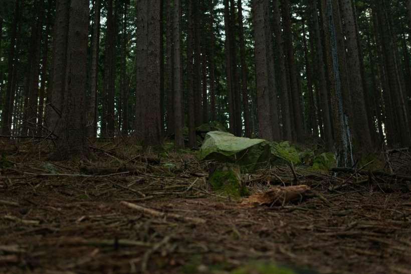 blackforest_08.jpg