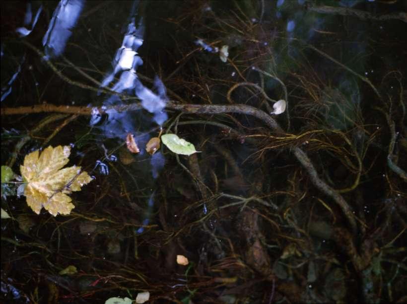 water_KirstenBecken_07.jpg