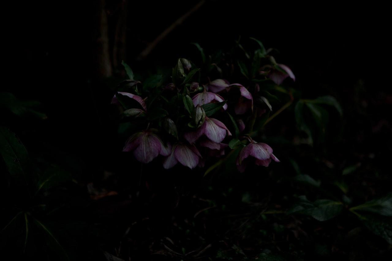 Kirsten Becken Cherry blossom girls